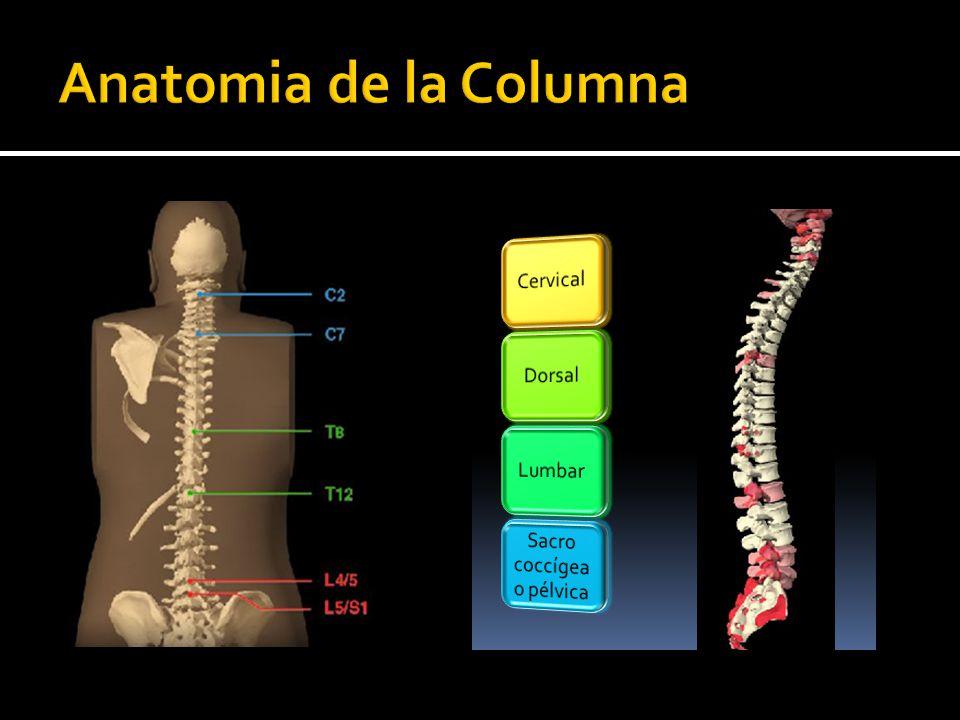 Asombroso Anatomía De La Columna Lumbar Y El Sacro Festooning ...