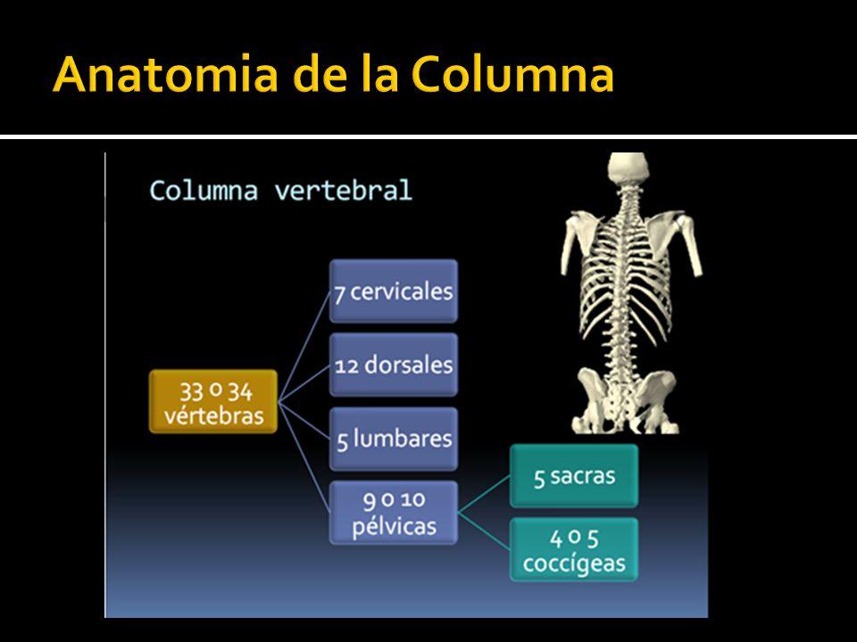 Increíble T Anatomía Columna Vertebral Regalo - Imágenes de Anatomía ...
