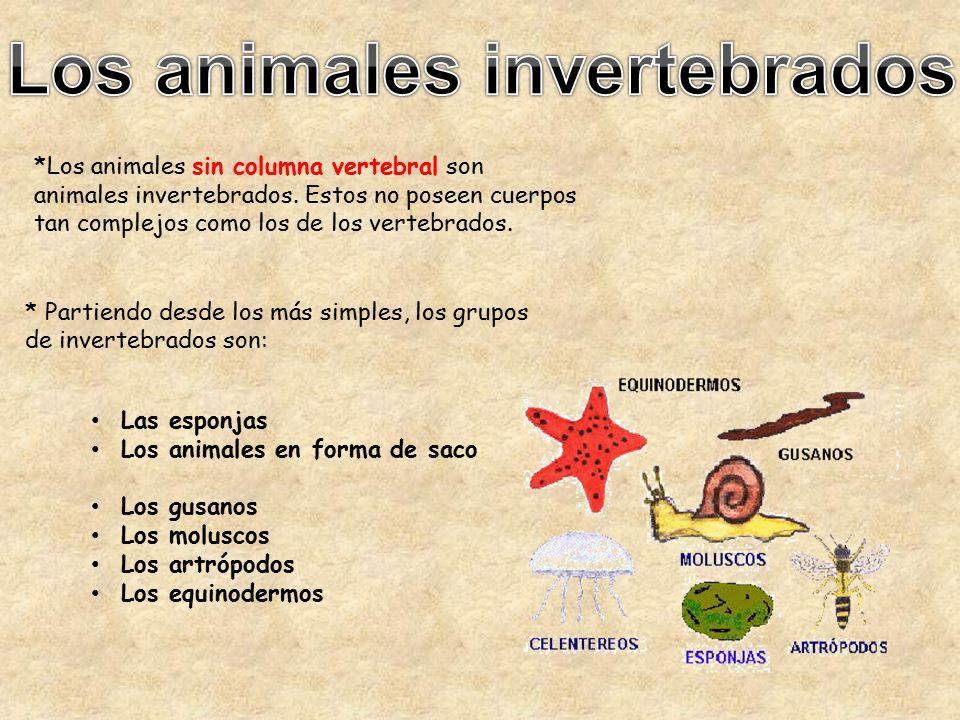Animales Invertebrados - ppt descargar