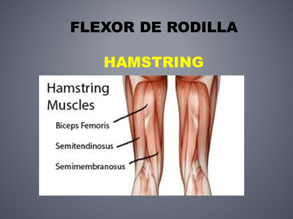 Vistoso Músculos Extensión De La Rodilla Modelo - Imágenes de ...