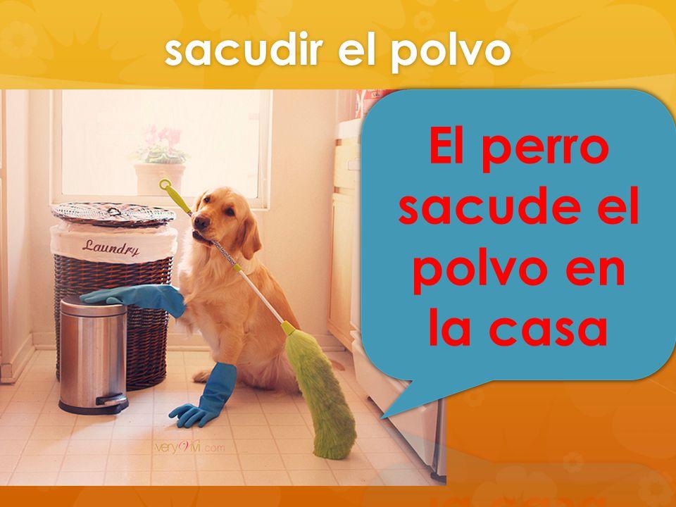 El perro sacude el polvo en la casa