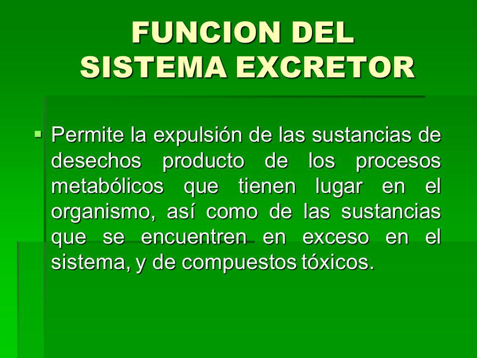 FUNCION DEL SISTEMA EXCRETOR