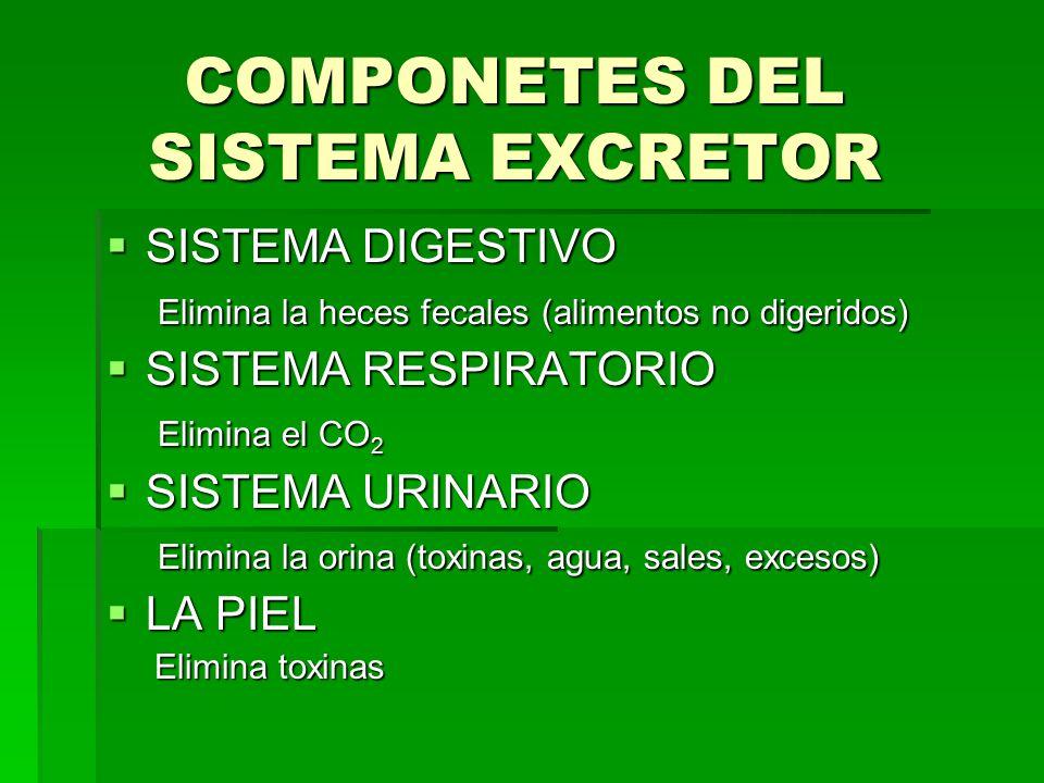 COMPONETES DEL SISTEMA EXCRETOR