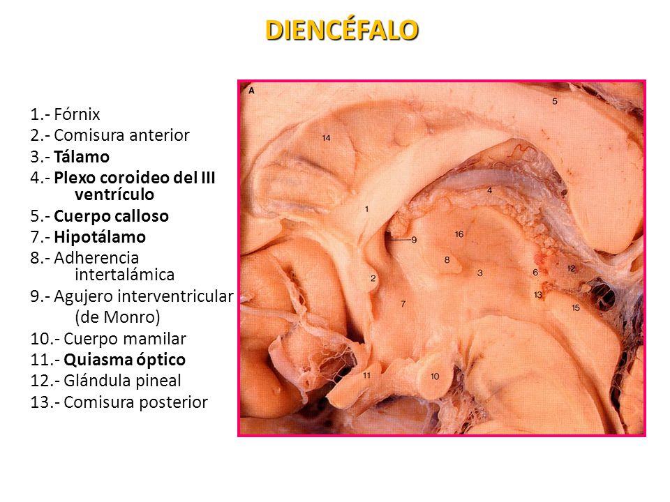 Neuroanatom a ppt video online descargar for Agujeros en el cuerpo