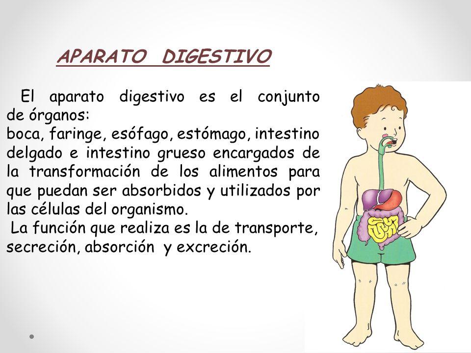 APARATO DIGESTIVO El aparato digestivo es el conjunto de órganos: