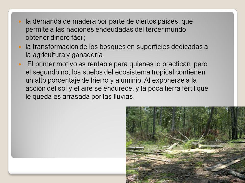 la demanda de madera por parte de ciertos países, que permite a las naciones endeudadas del tercer mundo obtener dinero fácil;