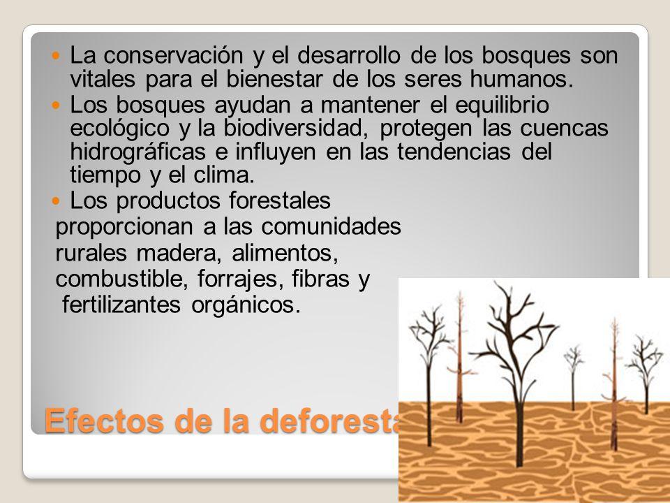 Efectos de la deforestacion
