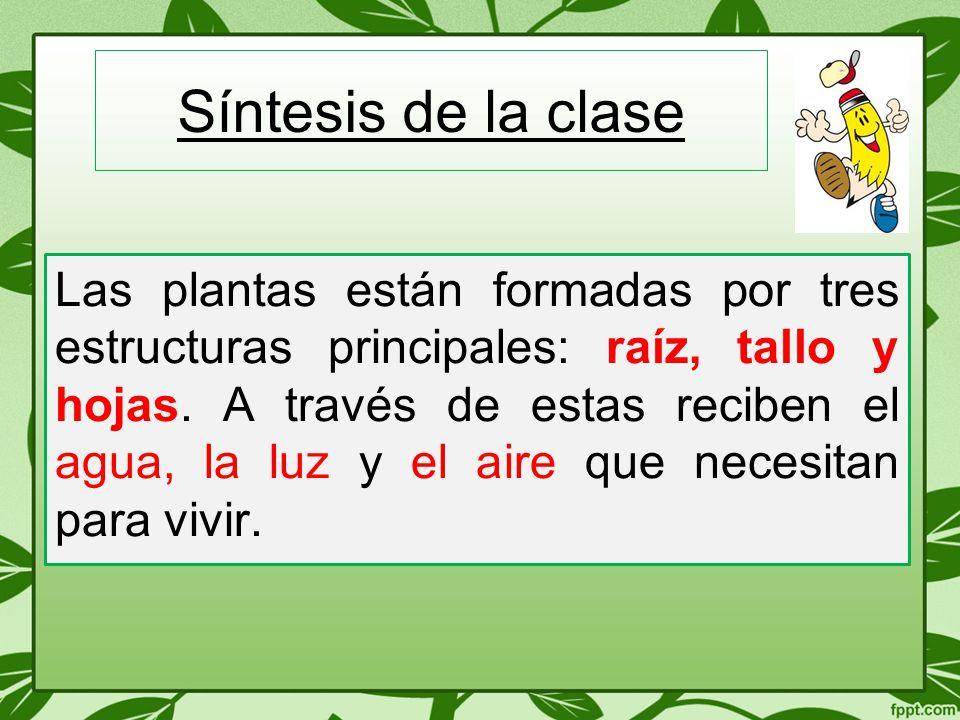 Síntesis de la clase