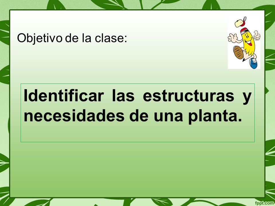 Identificar las estructuras y necesidades de una planta.