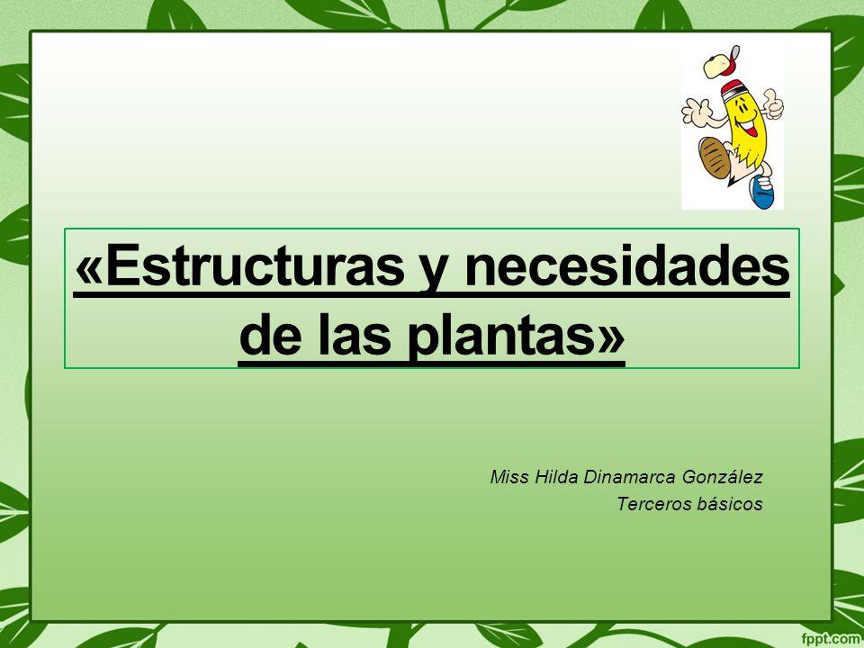 «Estructuras y necesidades de las plantas»