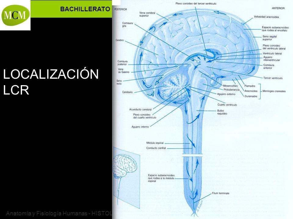 Hermosa Anatomía Y Fisiología De La Meningitis Inspiración ...