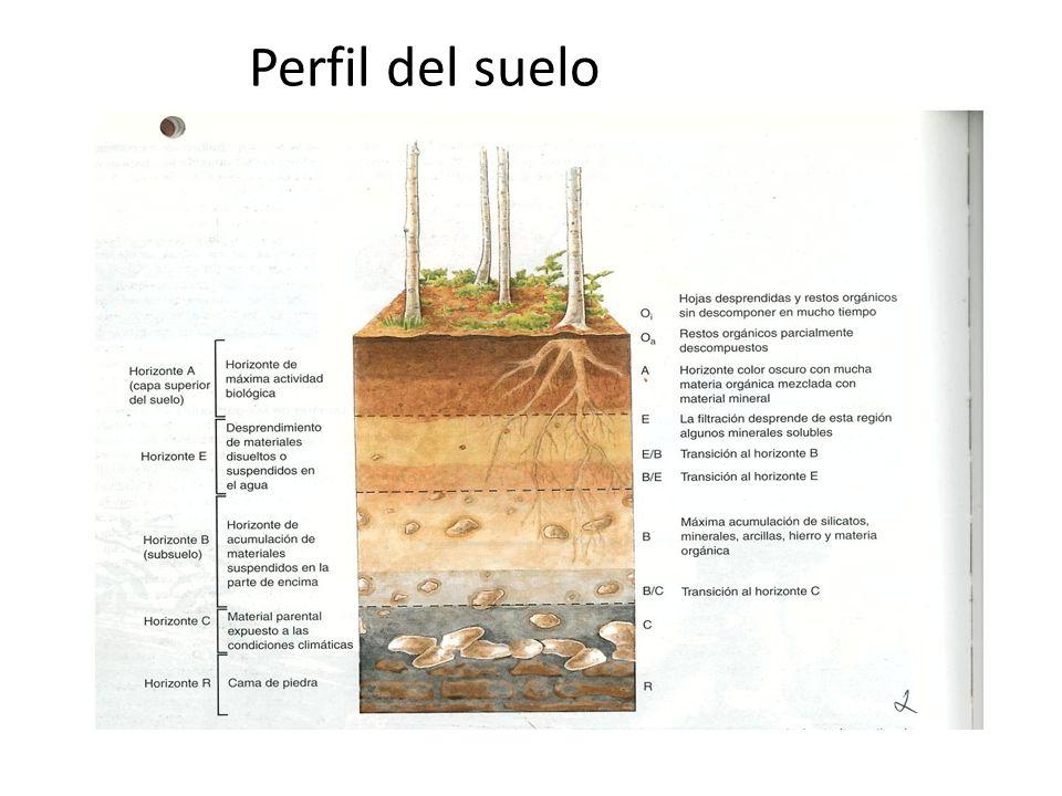El suelo ppt descargar for Perfil del suelo wikipedia