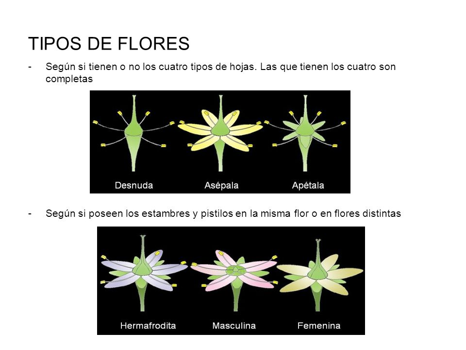 Las plantas ppt video online descargar for Cuales son los tipos de plantas