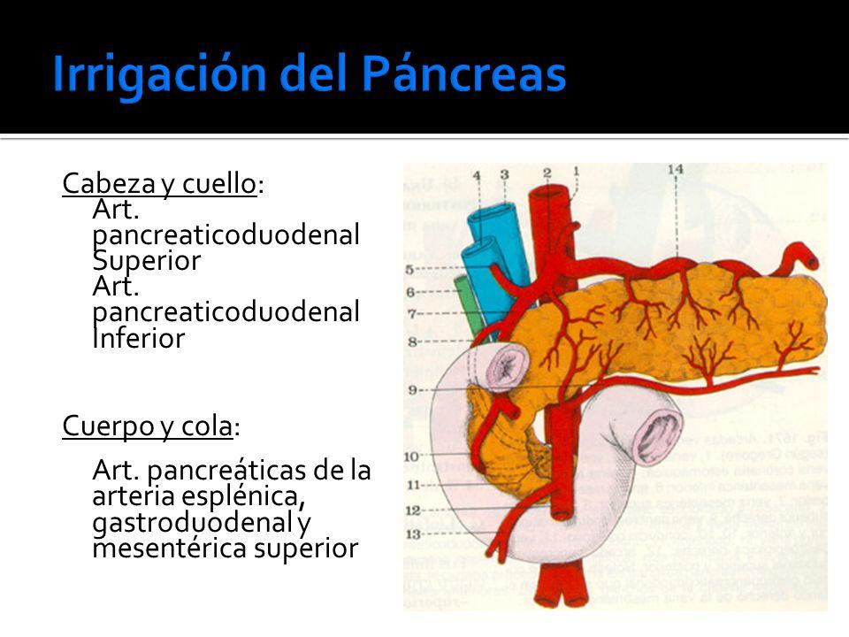 Pancreas anatomia e fisiologia