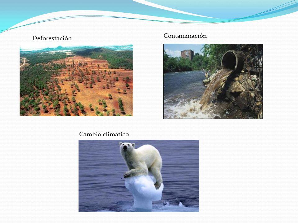 Contaminación Deforestación Cambio climático