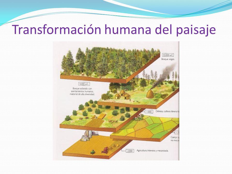 Transformación humana del paisaje