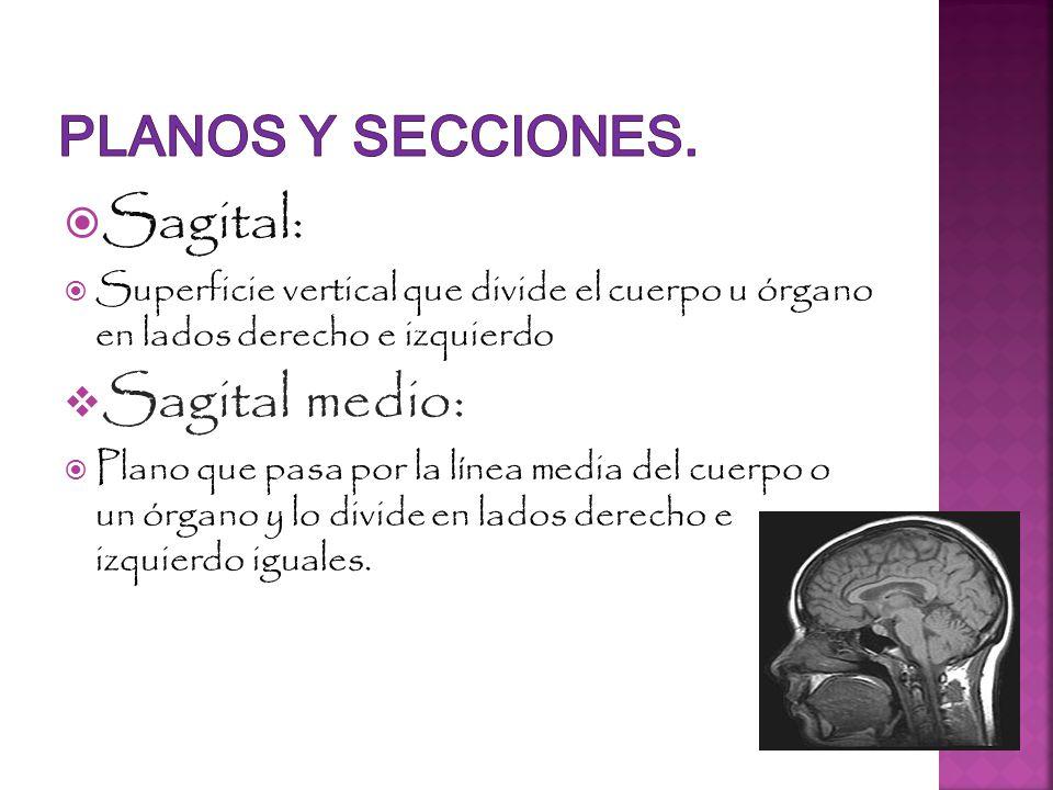 Sagital: Sagital medio: PLANOS Y SECCIONES.