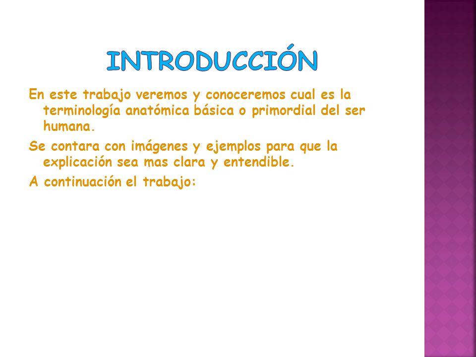 Bonito Anatomía Y Fisiología Introducción En El Cuerpo Humano ...