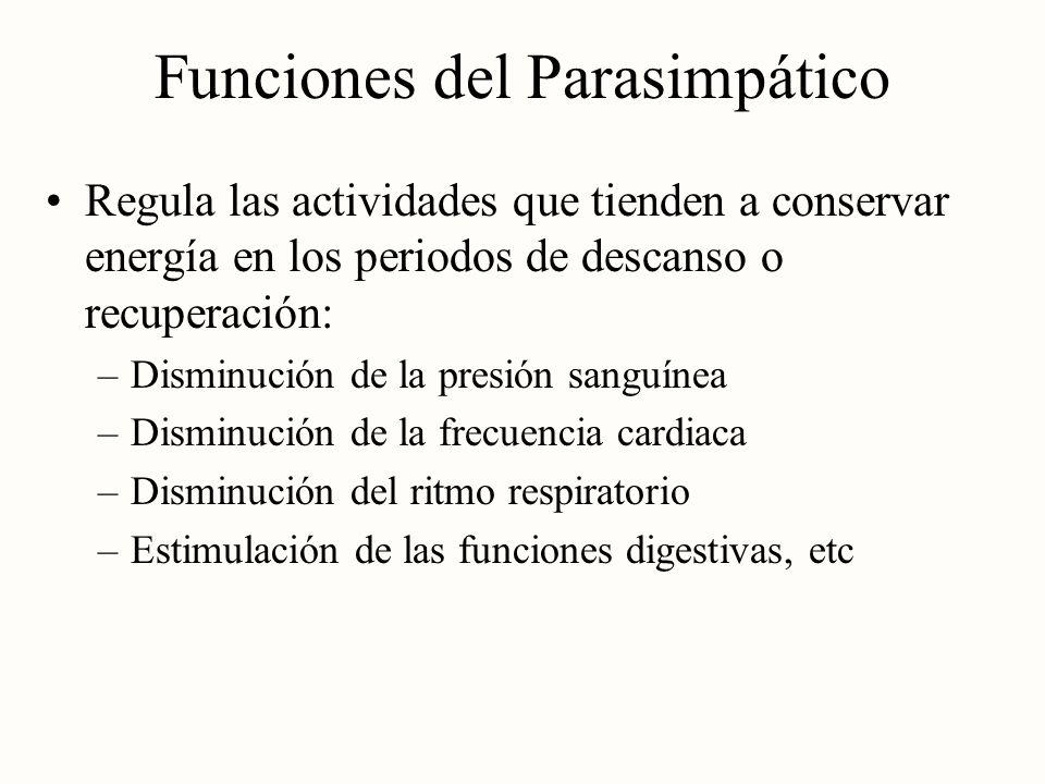 Funciones del Parasimpático
