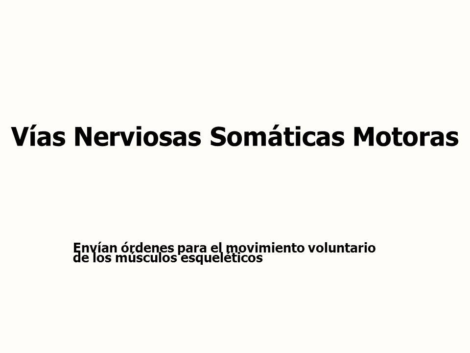 Vías Nerviosas Somáticas Motoras
