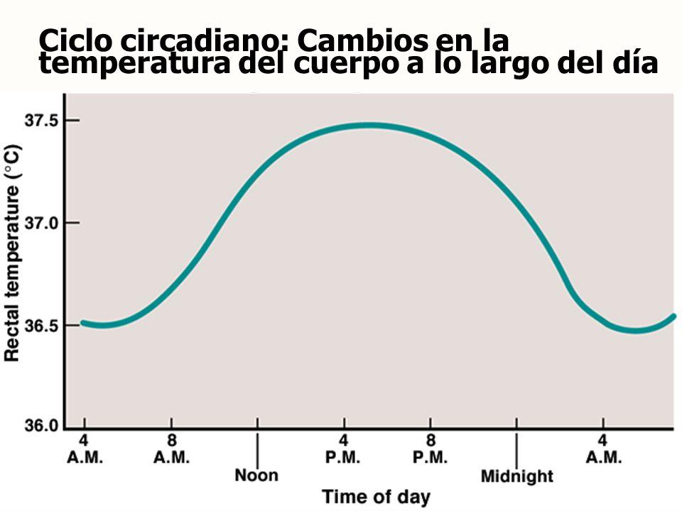 Ciclo circadiano: Cambios en la temperatura del cuerpo a lo largo del día