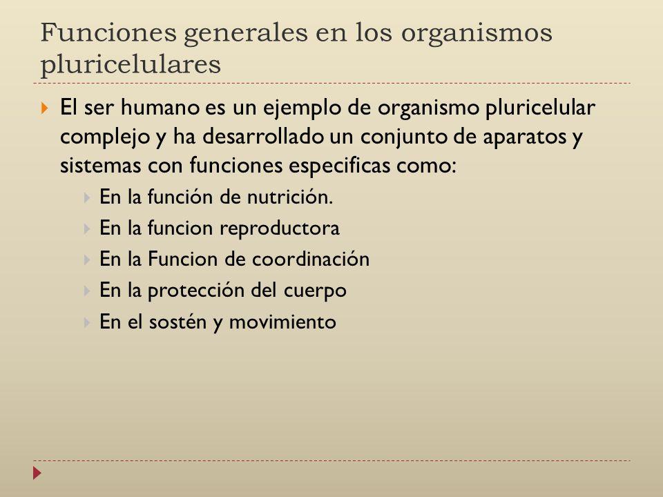 Funciones generales en los organismos pluricelulares