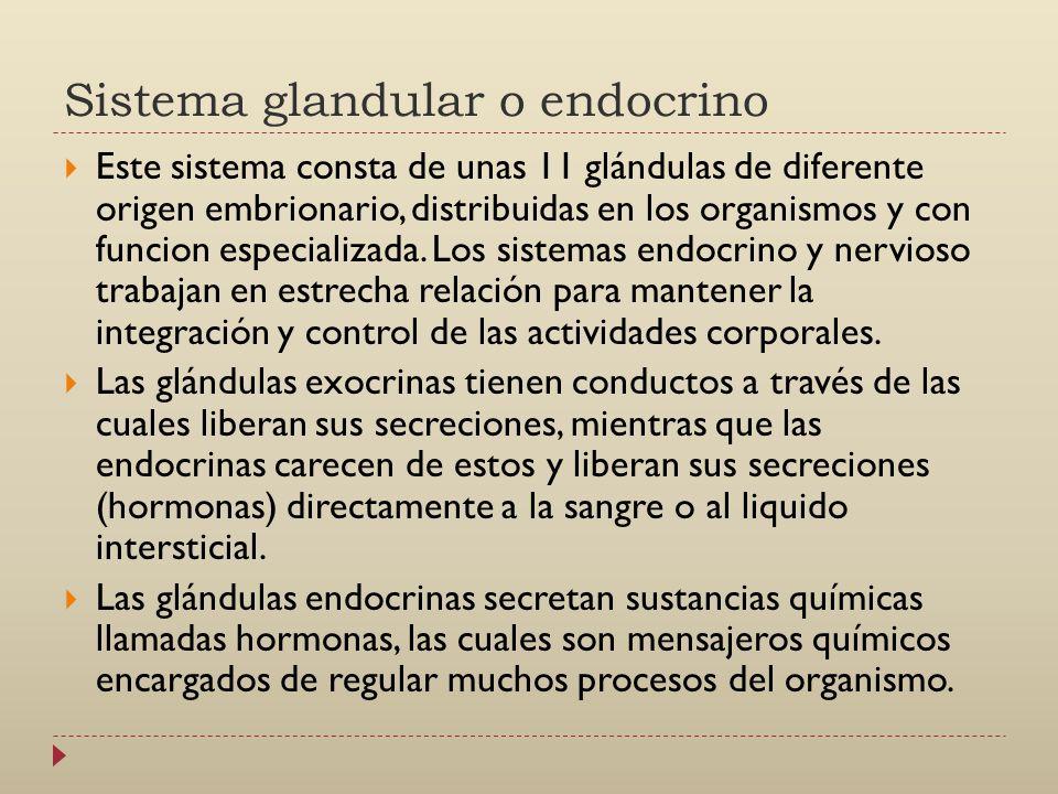 Sistema glandular o endocrino