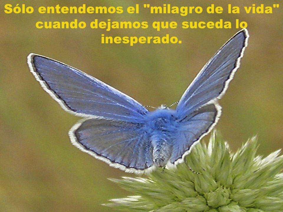 Sólo entendemos el milagro de la vida cuando dejamos que suceda lo inesperado.