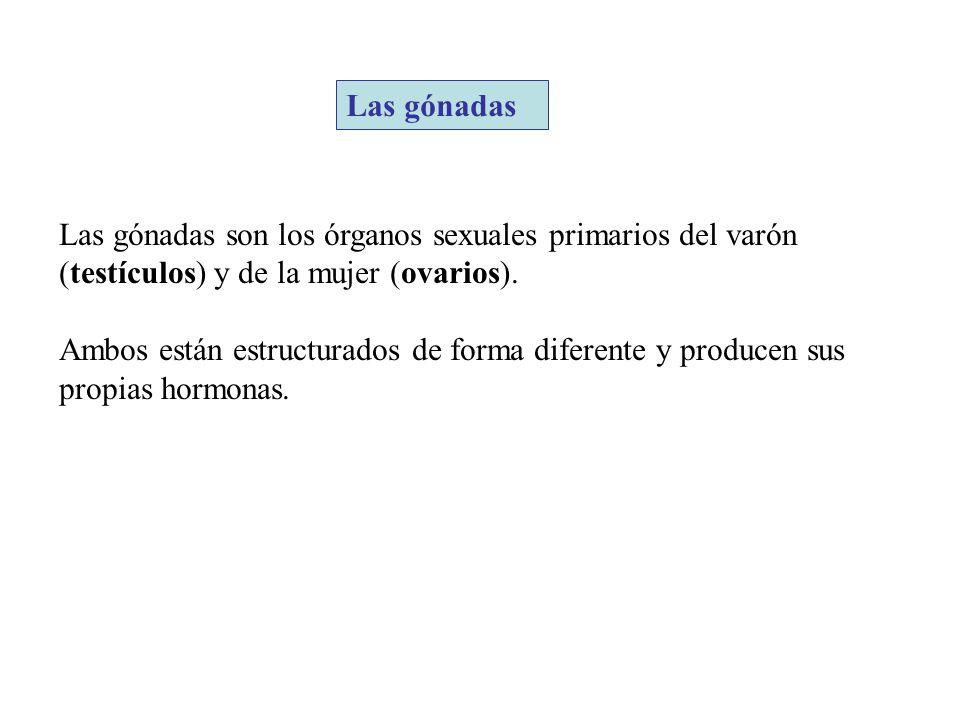 Las gónadas Las gónadas son los órganos sexuales primarios del varón (testículos) y de la mujer (ovarios).
