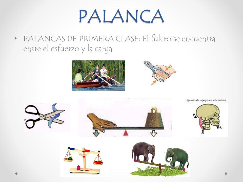 Increíble Palancas De 1ª Clase Componente - Anatomía de Las ...