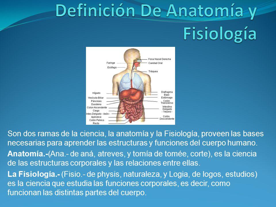 Famoso Definición De La Anatomía Humana Ilustración - Imágenes de ...