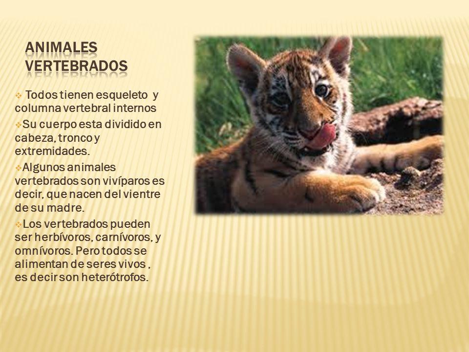 Tema 2 Los animales. - ppt descargar