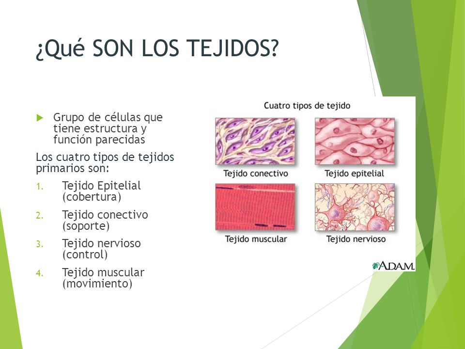 Tipos de tejidos pictures to pin on pinterest thepinsta - Tipos de tejados ...