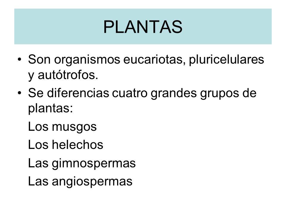 PLANTAS Son organismos eucariotas, pluricelulares y autótrofos.