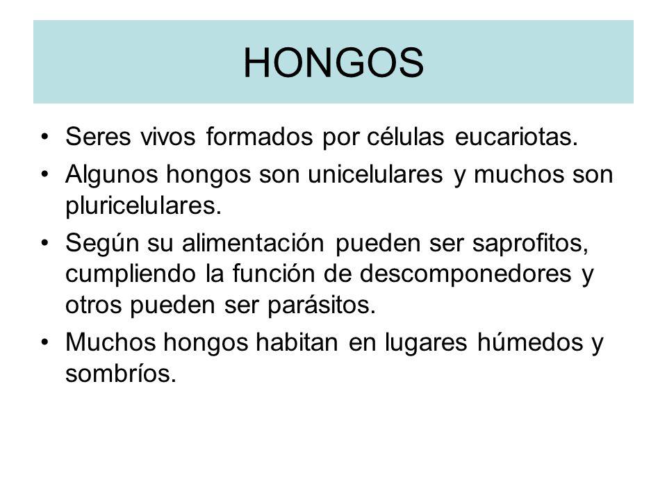 HONGOS Seres vivos formados por células eucariotas.