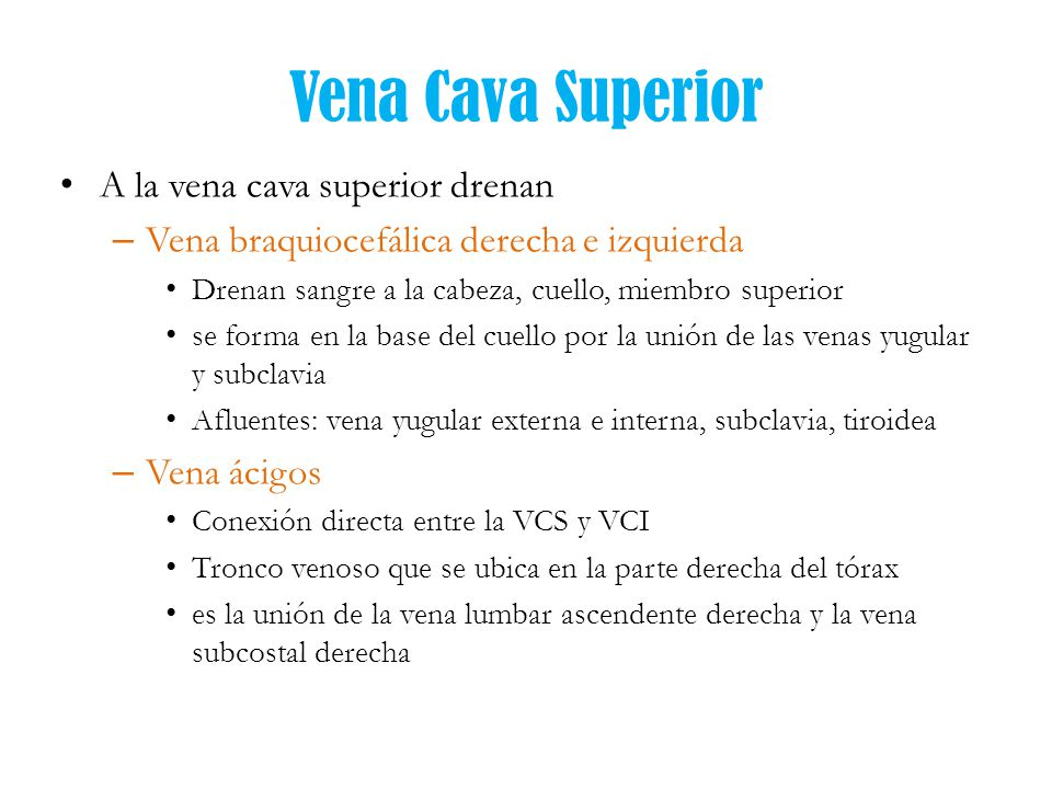 Afluentes De La Vena Cava Superior - Best Hawaiian Deals