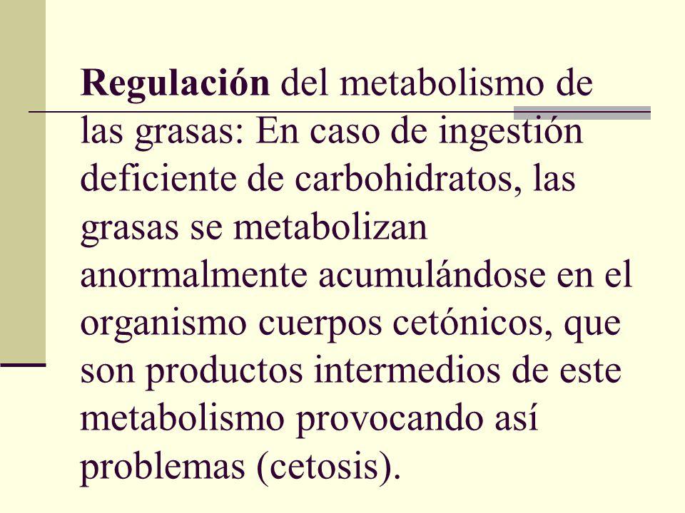 Regulación del metabolismo de las grasas: En caso de ingestión deficiente de carbohidratos, las grasas se metabolizan anormalmente acumulándose en el organismo cuerpos cetónicos, que son productos intermedios de este metabolismo provocando así problemas (cetosis).