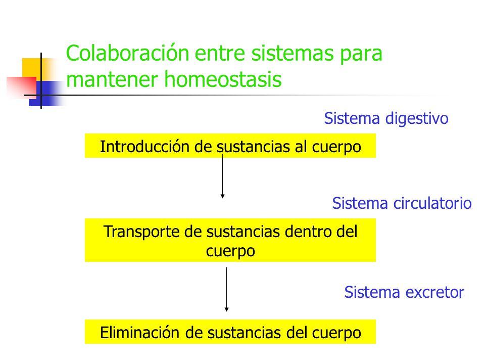 Colaboración entre sistemas para mantener homeostasis