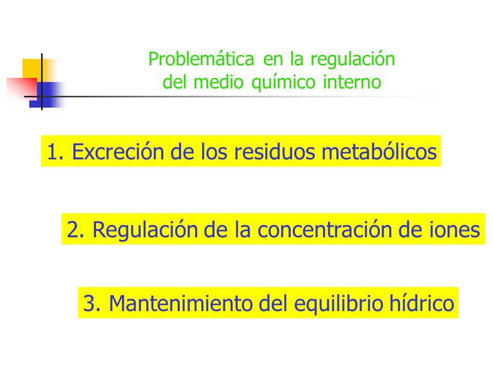 Problemática en la regulación del medio químico interno