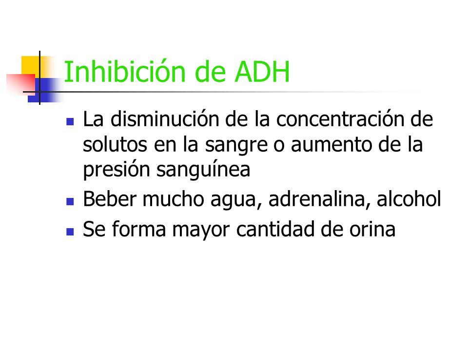 Inhibición de ADH La disminución de la concentración de solutos en la sangre o aumento de la presión sanguínea.