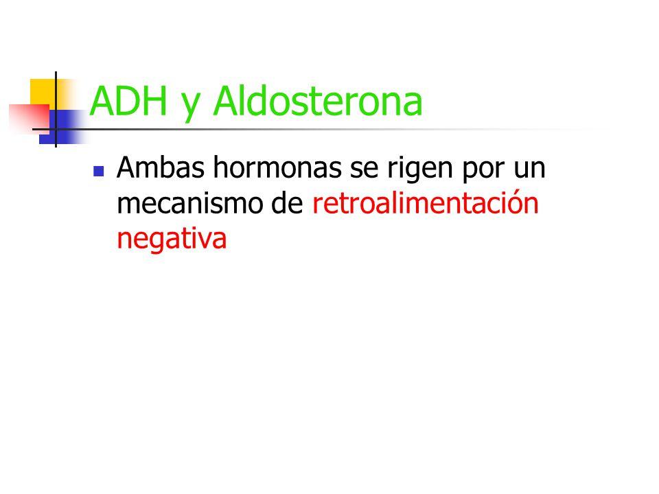 ADH y Aldosterona Ambas hormonas se rigen por un mecanismo de retroalimentación negativa