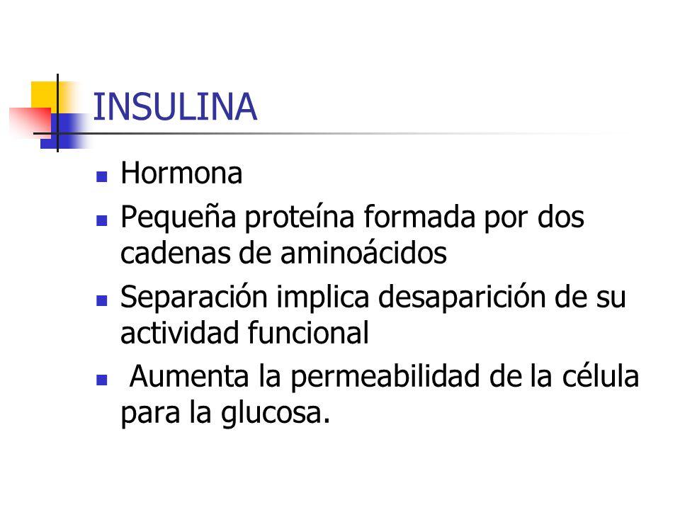 INSULINA Hormona. Pequeña proteína formada por dos cadenas de aminoácidos. Separación implica desaparición de su actividad funcional.