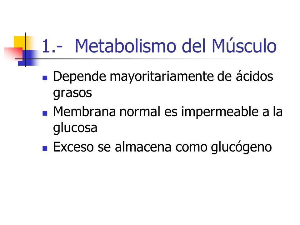 1.- Metabolismo del Músculo