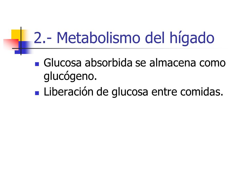 2.- Metabolismo del hígado