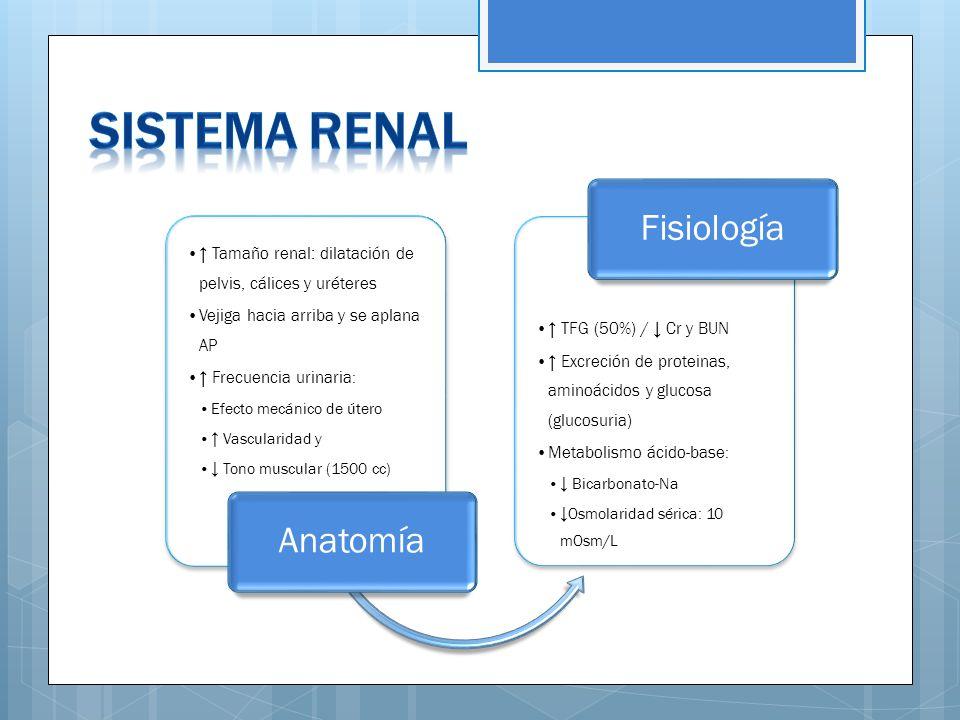 Único Anatomía De Ppt Sistema Urinario Motivo - Anatomía de Las ...
