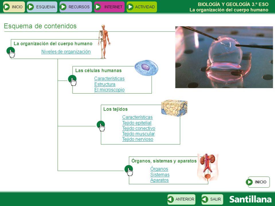 Esquema de contenidos La organización del cuerpo humano