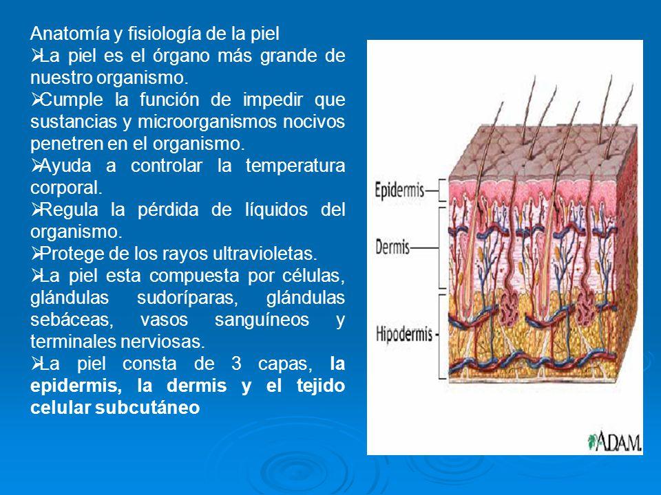 Famoso Tejido Imágenes Anatomía Y Fisiología Colección de Imágenes ...