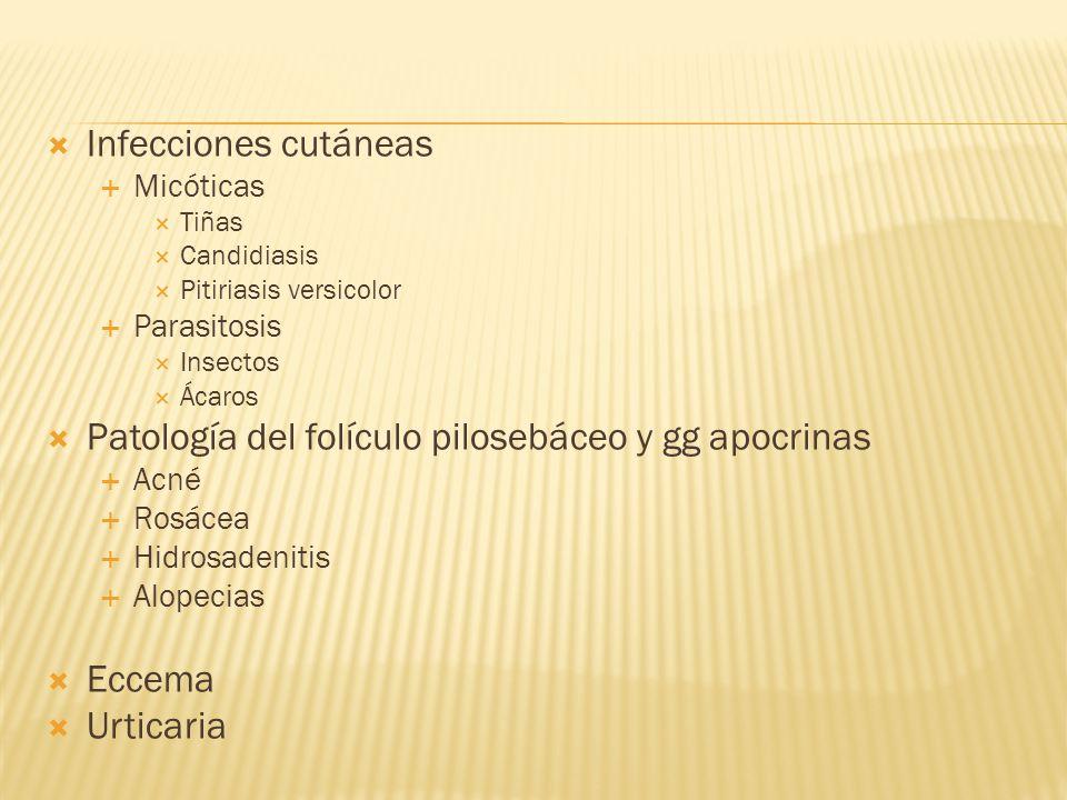 Patología del folículo pilosebáceo y gg apocrinas