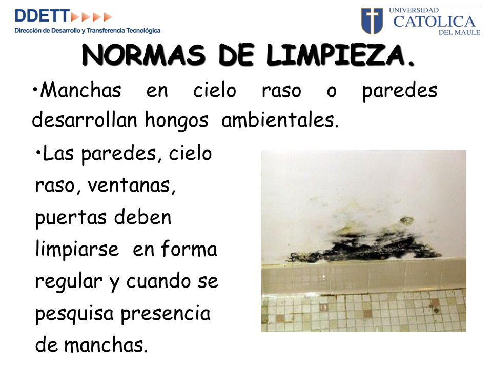 NORMAS DE LIMPIEZA. Manchas en cielo raso o paredes desarrollan hongos ambientales.