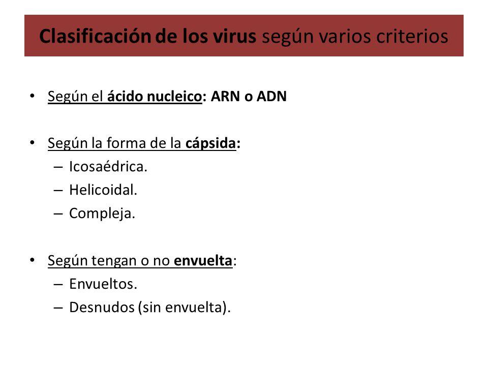 Clasificación de los virus según varios criterios